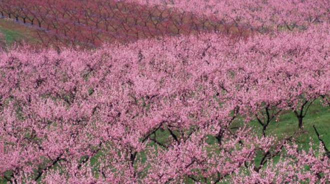 Ad Alba la Primavera è un grande evento tutto da seguire
