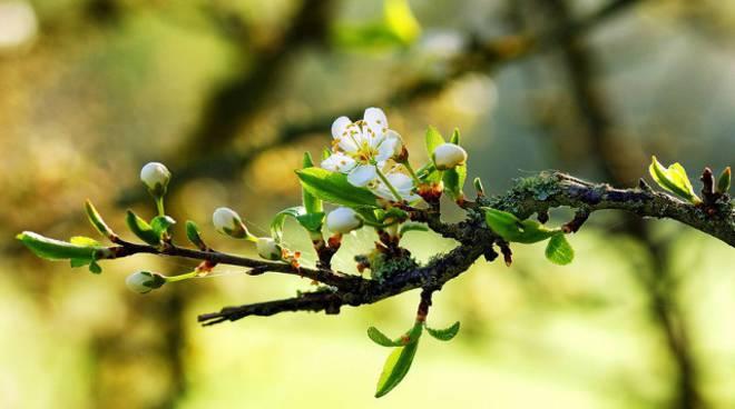 Domenica 29 marzo a Fontanile sboccia la Festa di Primavera