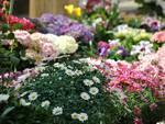 """Baraccone di Castagnito, venerdì 1 maggio la """"Fiera dei fiori e dei piccoli animali"""""""