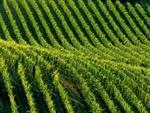 Festività e vacanze in agriturismo, l'ampia l'offerta di Terranostra nell'Astigiano