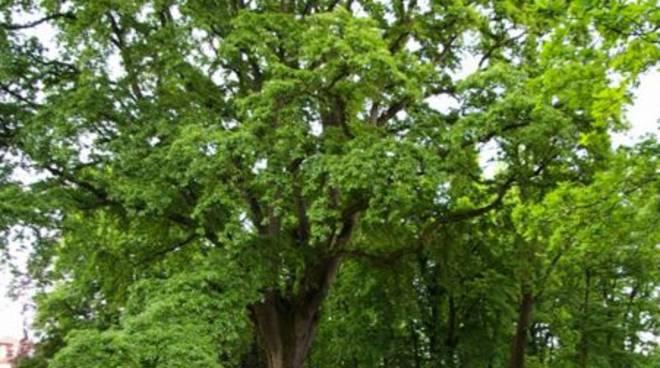 ''L'albero di maggio, quasi un festival… al verde'' iniziativa del Servizio Istruzione della Città di Asti