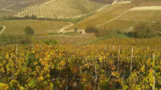 Agriturismi in crescita anche in Piemonte