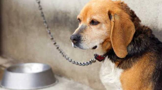 Paola Re: ''i cani sono i nostri migliori amici, facciamo in modo di non essere i loro migliori schiavisti''