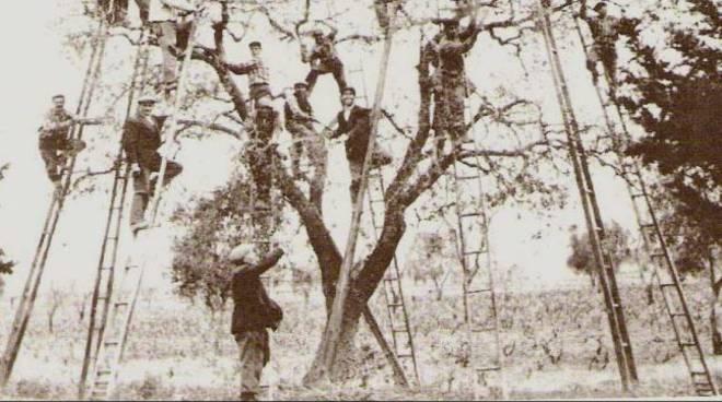 Corso di potatura ed innesto degli alberi da frutto a Villafranca d'Asti