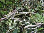 Da lunedì 22 febbraio riprende ad Asti la raccolta di verde e ramaglie