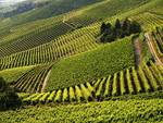 L'Europa del Vino in visita al Monferrato, culla della Barbera d'Asti