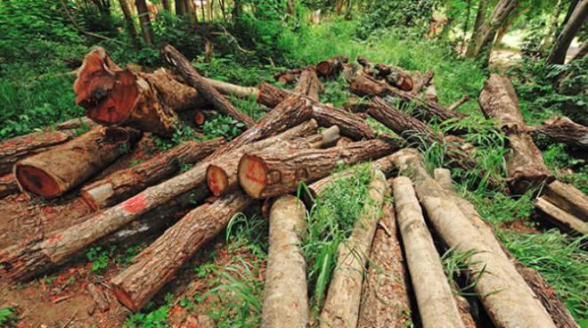 Boscaiolo di Canelli denunciato per aver distrutto 8mila mq di bosco e rubato il legname