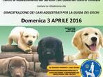 Domenica 3 aprile la dimostrazione cani guida con l'APRI