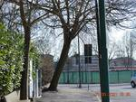 ''Quell'albero in via Monsignor Marello sporge troppo, è necessario intervenire per prevenire danni''