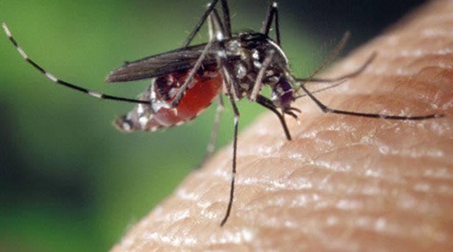 Zanzara tigre: massima allerta nella provincia di Asti