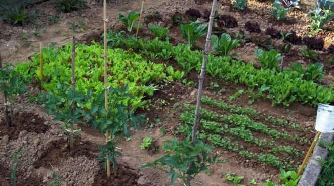 Italiani, popolo di hobby farmers: oltre 20 milioni si dedicano all'orto