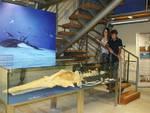 Museo dei fossili: si aggiunge un giorno in più di accesso gratuito per il Settembre Astigiano