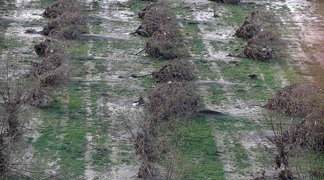 Maltempo: tanti danni anche nell'astigiano, Coldiretti chiede un tavolo di crisi