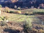 La passione dell'ulivo sbarca tra i moscati di Castiglione Tinella