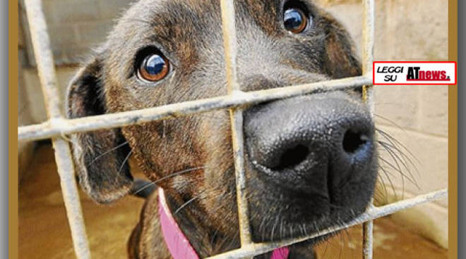 Asti. UNA: raccolta alimentare per animali abbandonati