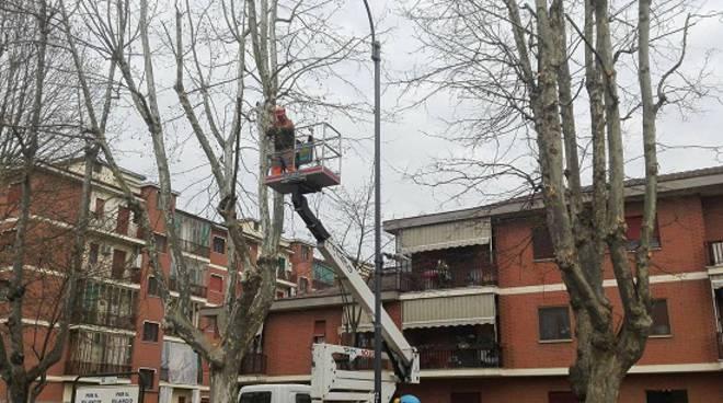 Asti: Iniziata la potatura dei 250 platani di viale Pilone