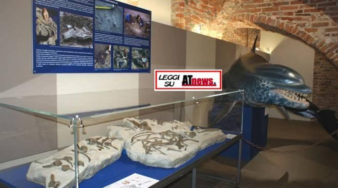 Asti, piace il nuovo Museo Paleontologico: 700 persone in una settimana