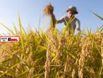 Coldiretti Piemonte: costruire urgentemente un nuovo strumento alternativo ai voucher in agricoltura