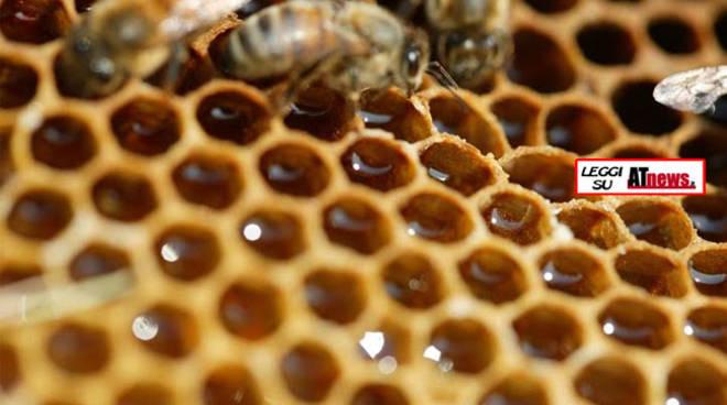 Il miele di bosco della cooperativa astigiana Abello scelto dalla principale catena di supermercati svizzeri