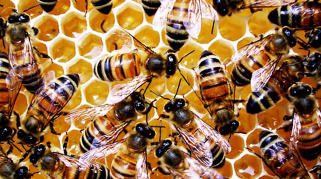 Astigiana muore dopo punture di api