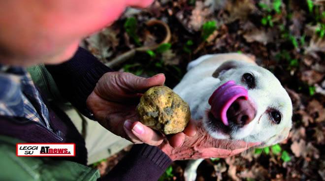 cane da tartufo