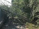 alberi caduti ciclabile ospedale
