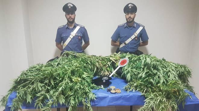 marijuana mombaruzzo 27092018