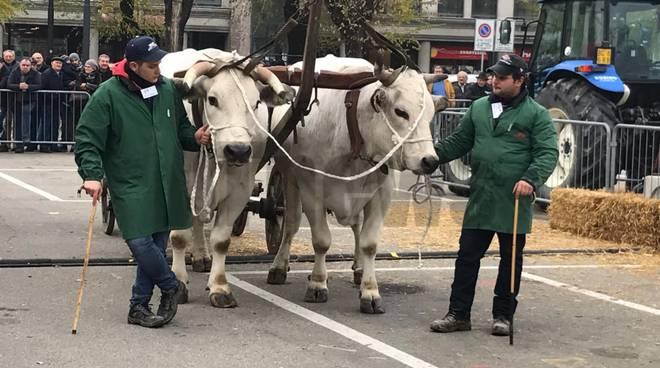 Con la Fiera del bue grasso Nizza rivive l antica tradizione del mercato del  bestiame - ATNews.it ed655881ef4a