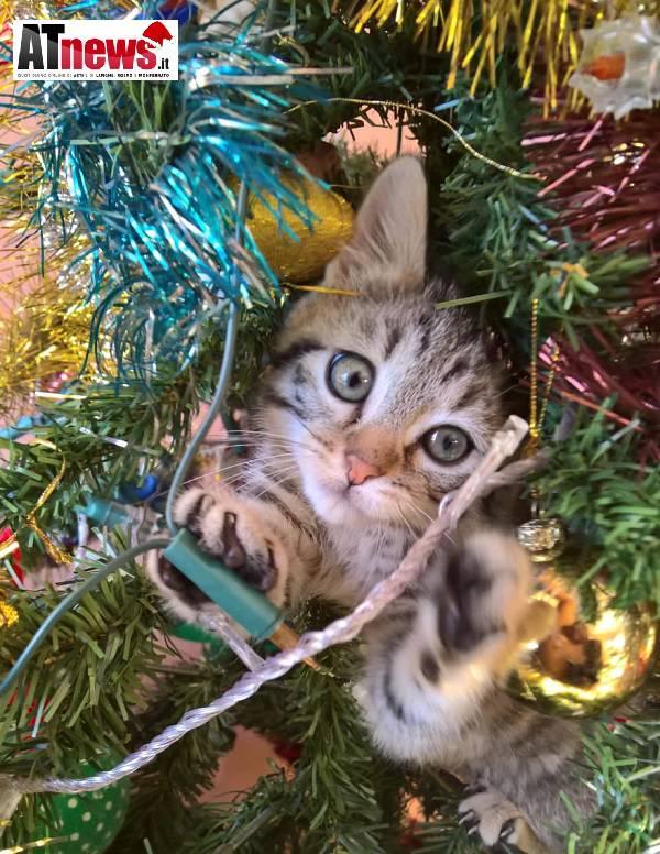 Foto Con Auguri Di Buon Natale.In Cerca Di Bellezza Con Tanti Auguri Di Buon Natale