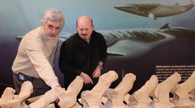 bisconti e damarco museo fossili