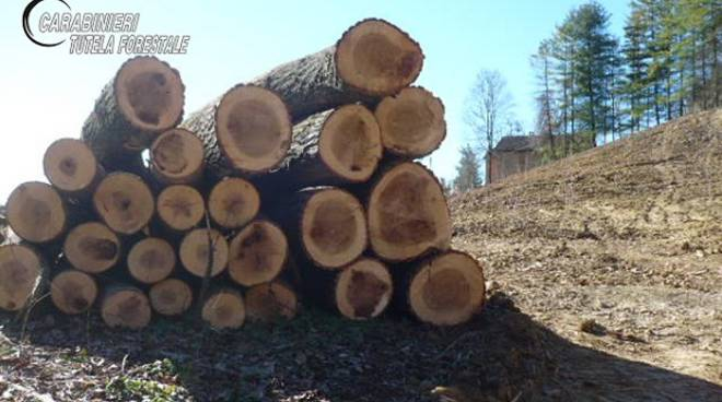 carabinieri forestali taglio bosco