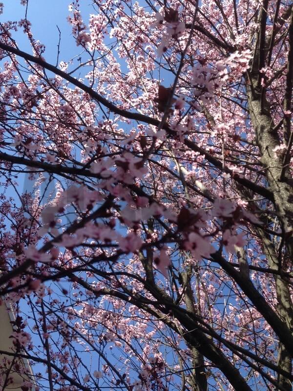 in cerca di bellezza primavera