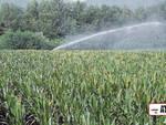 irrigare, irrigazione