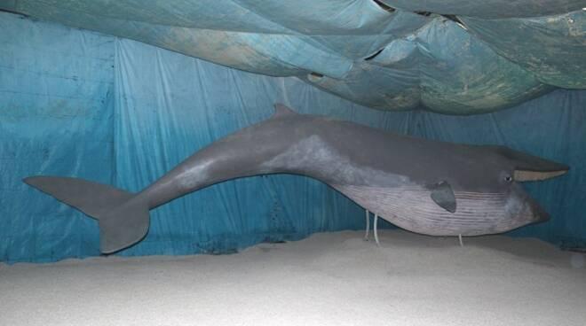 balena emilia