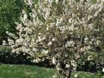 la primavera by eugenio baino