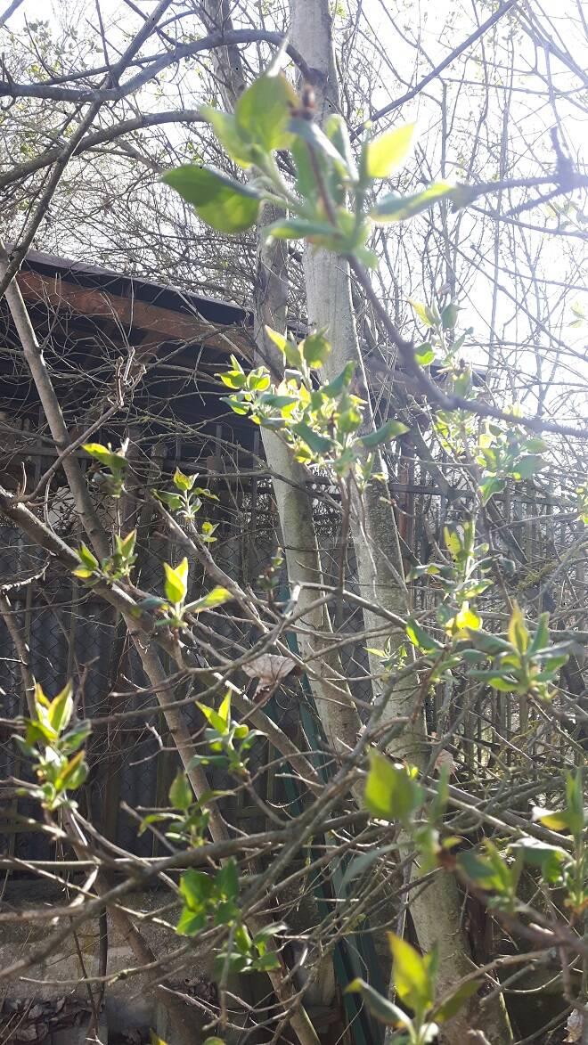 primavera federico negro
