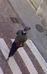 operazione giudizio 2 immagini telecamere