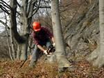 corsi formazione forestale