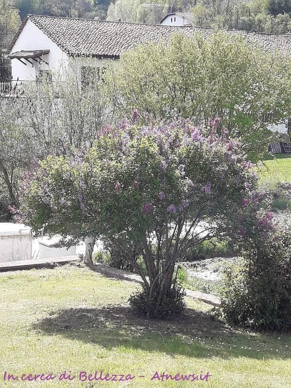 primavera a mombercelli