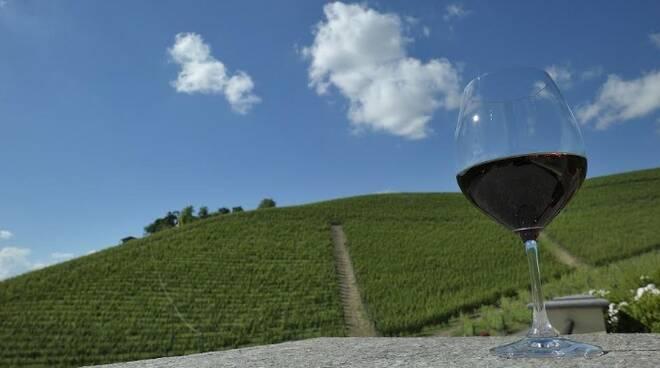 progetto vino collisioni barolo