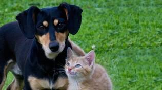 animali domestici cane e gatto
