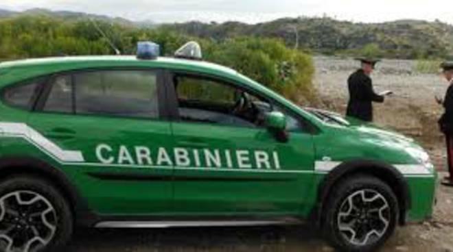 carabinieri forestali mondovi
