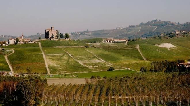 collezione di vitigni