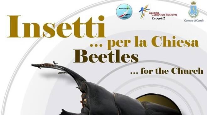 mostra insetti canelli