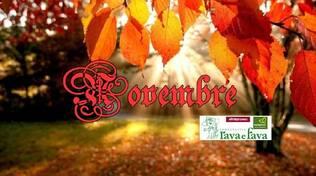novembre rava fava