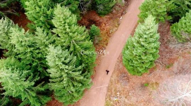 albero di natale fonte genova24