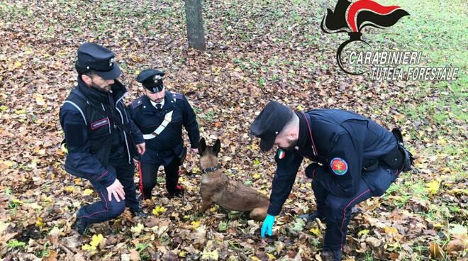Carabinieri forestali canelli