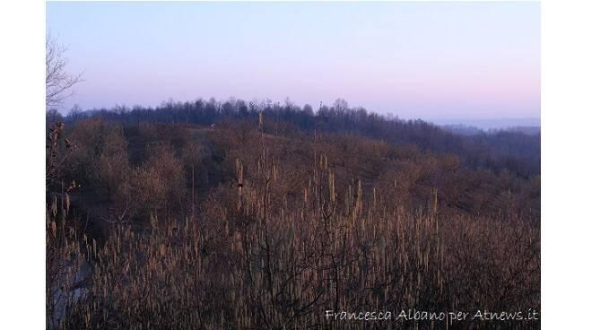 noccioleto invernale francesca albano