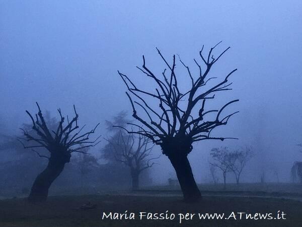 maria fassio nebbia in cerca di bellezza