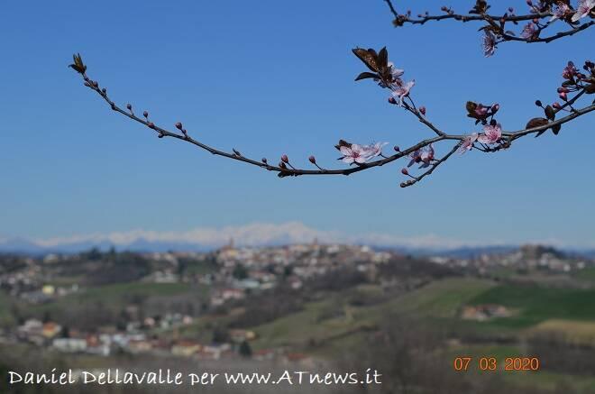 daniel dellavalle in cerca di bellezza primavera